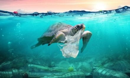 How Blockchain Can Win the War Against Plastic Waste